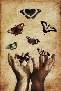 butterflies-843298_1920 (2)