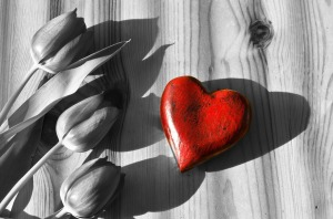 red heart black and white tulip background