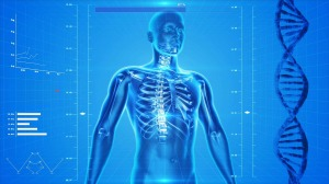 human-skeleton-163715_1280 (2)