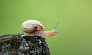 snail-393250_1280 (2)